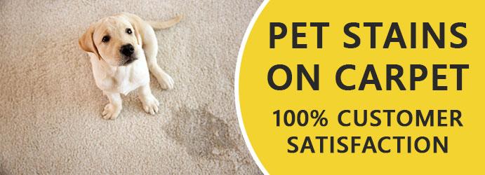 Pet Stains On Carpet
