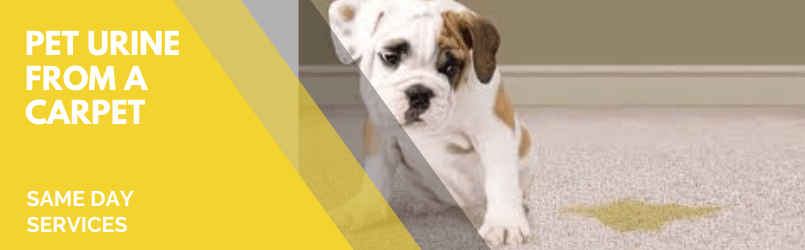 carpet Pet urine cleaning